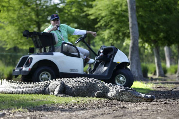 ENJOY the GAME cahillgolf.com Golf hazard - a hazard is an area of a golf course in the sport of golf which provides a difficult obstacle. Possibly an unmovable obstruction.