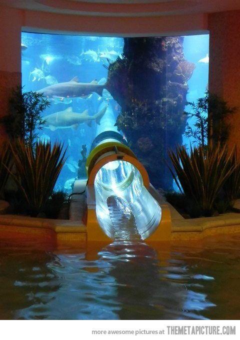 Shark Tank Water Slide...for Brianna!!!: Las Vegas, Buckets Lists, Lasvega, Sharks Tanks, Aquarium, Water Sliding, House, Waterslid, The Bahama