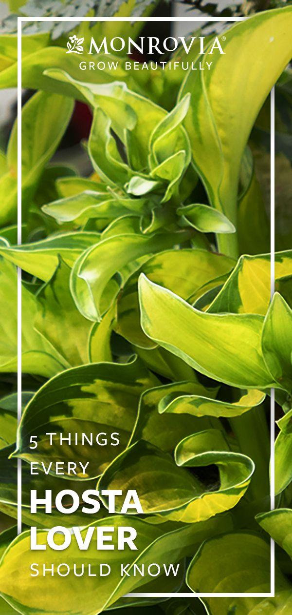 5 Möglichkeiten zum Entwerfen mit Hostas moglichkeiten hostas entwerfen