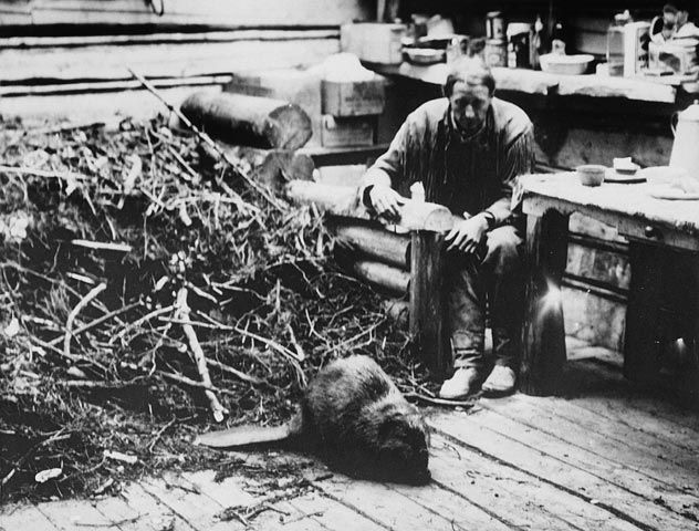 Original title: Beavers working on their lodge inside Grey Owl's cabin, Prince Albert National Park.