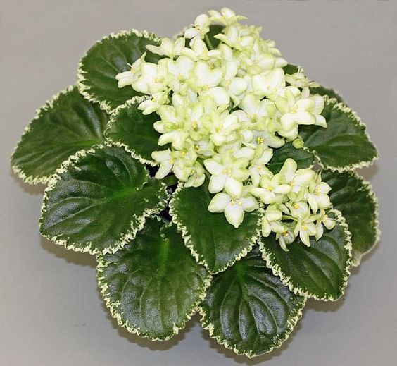 White Flowering House Plants 52 best house plants for mothers day images on pinterest