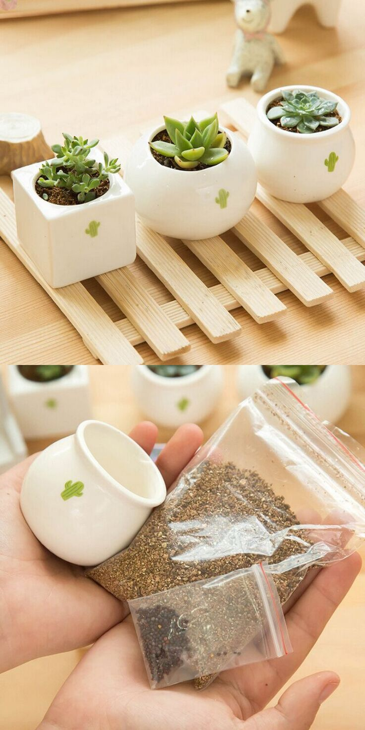 Ceramic pot with  bonsai's seeds or other plants. This little plant is decorate your house and make it a little more comfortable. You can put it, for example, on the table where you work. Price $4.82 #Decoration #Plant