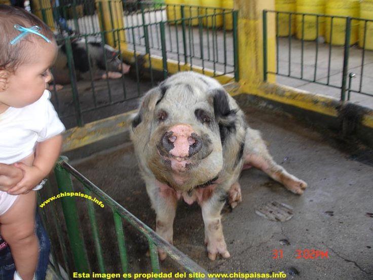 UNA SONRISA MARRANERA...............(Recreaciones  parque Panaca -  Eje Cafetero -  Montenegro Quindío-  Colombia) http://www.chispaisas.info/pana11.htm