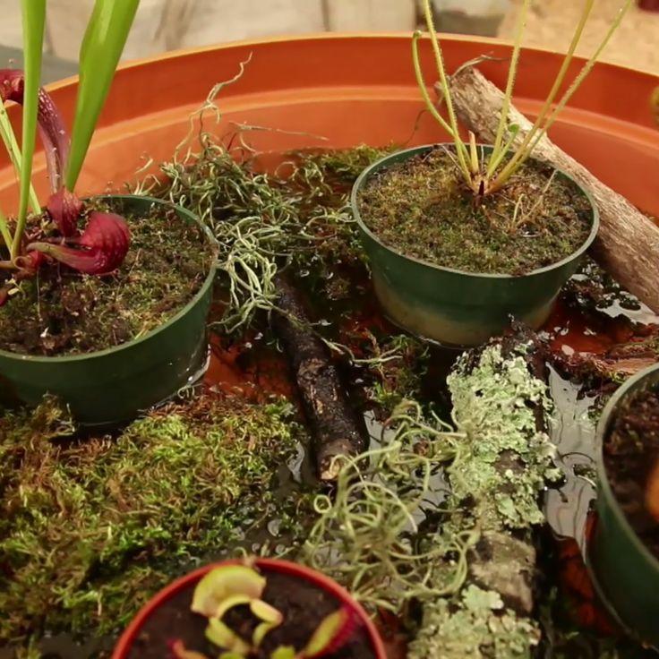 Create a Carnivorous Plant Garden