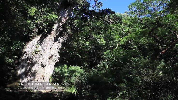 屋久島(やくしま)は、鹿児島県の大隅半島南南西約60kmの海上に位置する島。熊毛郡屋久島町に属し、近隣の種子島や口永良部島などと共に大隅諸島を形成する。より南方にトカラ列島と南西諸島が位置する。
