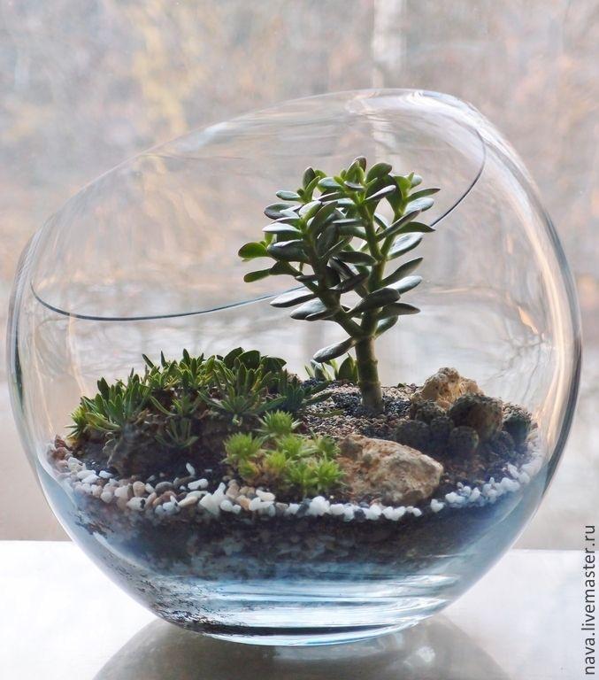 Купить Каменистый сад суккулентов - зеленый, флорариум, суккуленты, Сад в бутылке, микроландшафт, живые растения