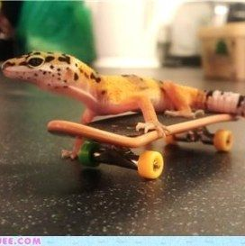 Funny Leopard Gecko Pictures
