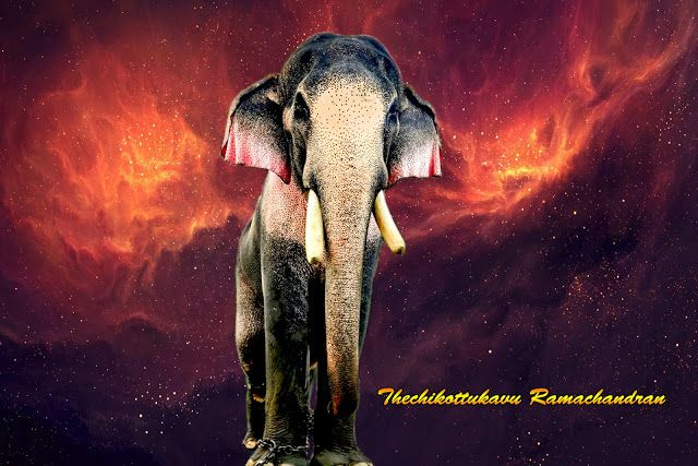 Thechikottukavu Ramachandran Hd Photos With Images Elephant