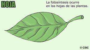 hoja de planta