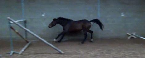 http://littlestfilly.tumblr.com/post/163019122423/spanishequestrian-pragnificent-warmboobz