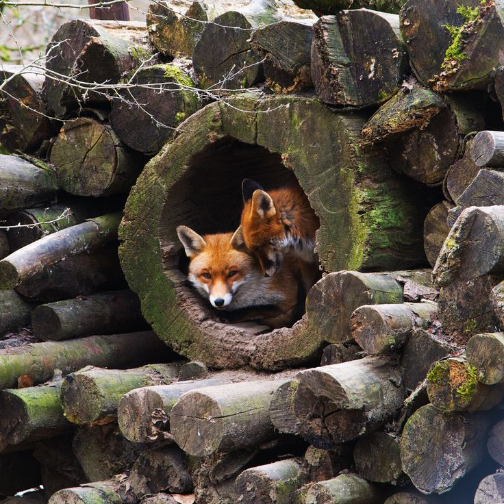 two buddies in a hole