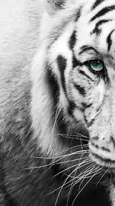 white tiger wallpaper iphone - Google Search