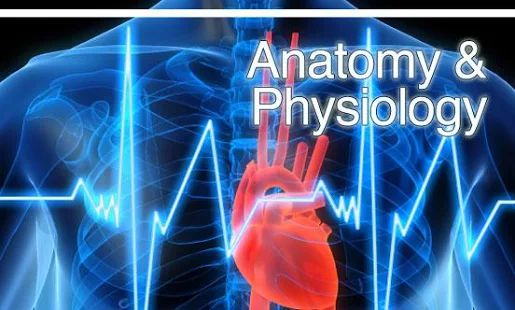 1000 Ideas About Human Soul On Pinterest: 1000+ Ideas About Physiology On Pinterest