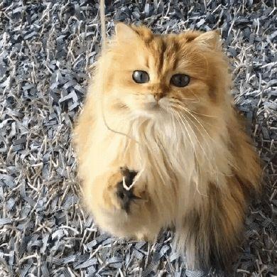 Sanatlı Bi Blog Dünya'nın En Fotojenik Kedisi Smoothie ile Tanışın 29