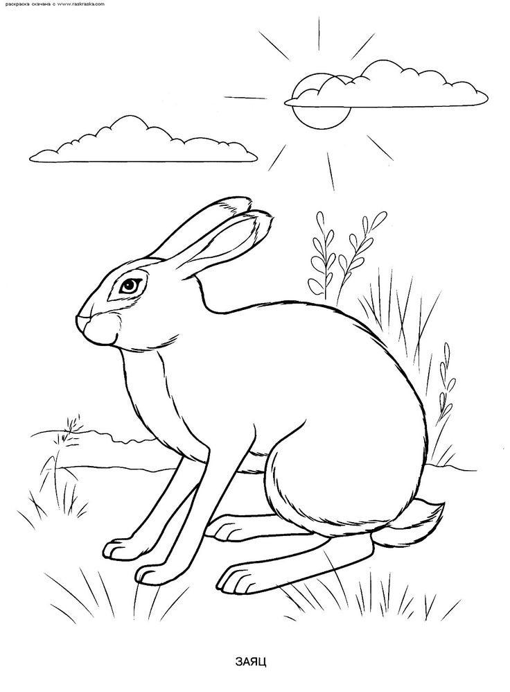 Coloring wild and domestic animals birds fish raquo, guess how much i love you coloring pages