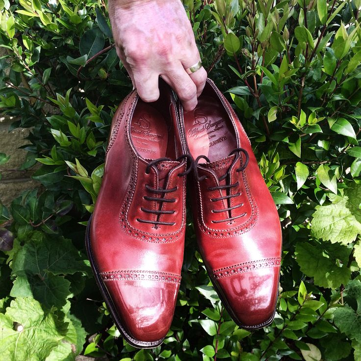 Burze shine on my cherry AS Moores   Tried to tag these onto the video but it didn't work. .  .  .  @alfredsargent @afinepairofshoes @saphir_official @burzanblog #alfredsargent #afinepairofshoes #saphir_official #saphir #shoes #shoestagram #spitshine #shoegazing #shoegazingblog #mensstyle #styleforum #madetobeworn #goodyearwelted #burzanhands #shoeshine #polish #glacage #madeinengland #therapy
