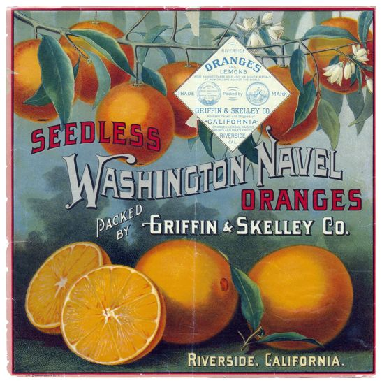 Washington Navel Oranges