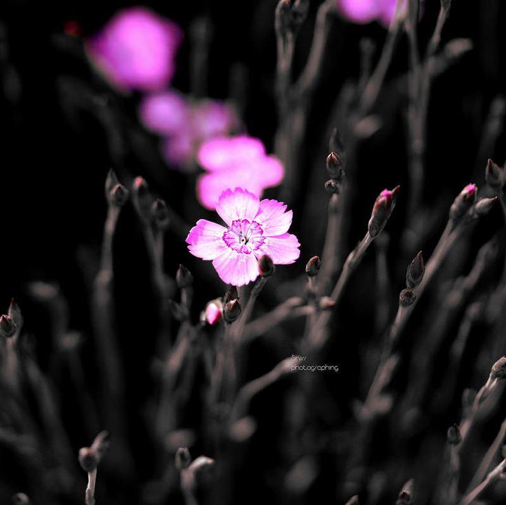 Pink | by Siniirr
