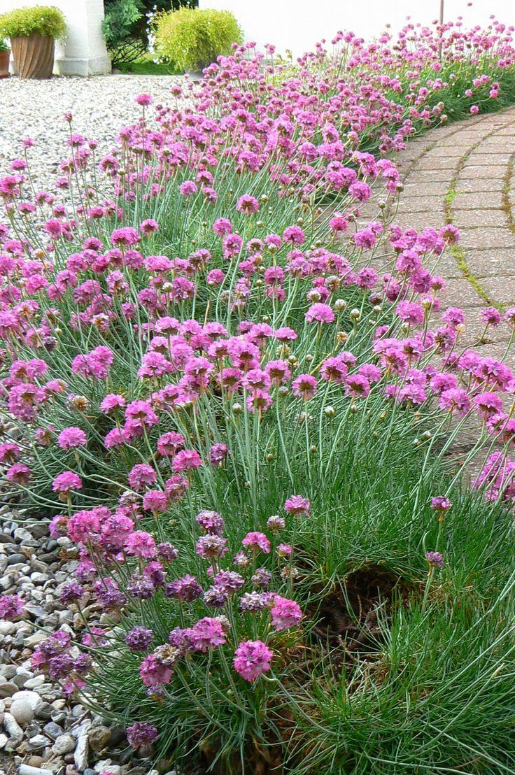 Image result for engelsk græs