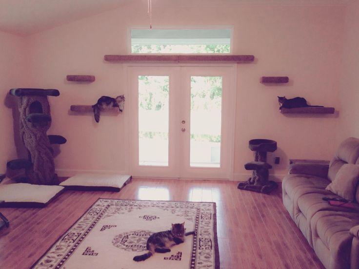 best 25 cat wall shelves ideas on pinterest diy cat. Black Bedroom Furniture Sets. Home Design Ideas