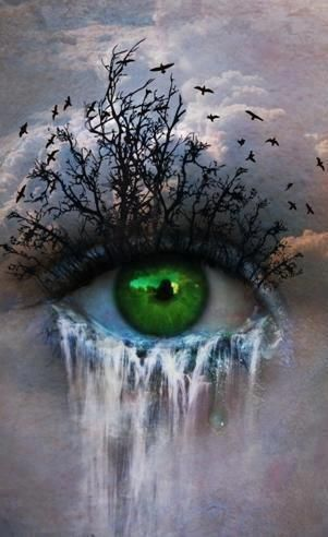 nature's eye                                                       …