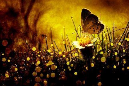 Niech Ci się przyśnią ... Niech Ci się przyśnią pory roku  nieśmiałym blaskiem, z wiatru szeptem  z śladem dotknięcia ciepłej dłoni  i myślą lekką jak powietrze… Niech zawirują słońcem w tańcu,  lotem radości nad przestrzenią,  błękitem odczuć, srebrem śmiechu,  gwiazdami, co się w oczach mienią Jak wyczulona gra promieni  wkrada się złotem między liście  tak niech kolejne krople czasu,  pogodą tulą Ci dni wszystkie. ( Maria Polak (Maryla)