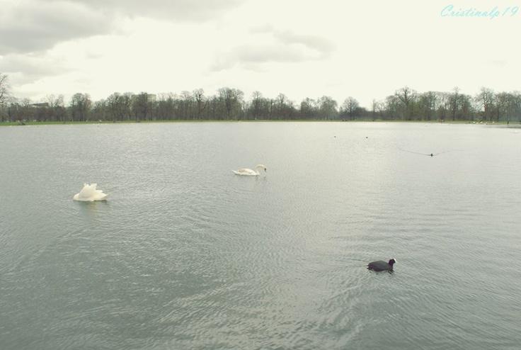 #Londres #London #Travel #Viaje #Park #Lago #Water #Ducks #Patos