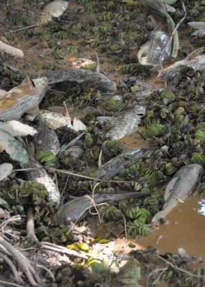 Restaurar natureza tomada por lama é impossível