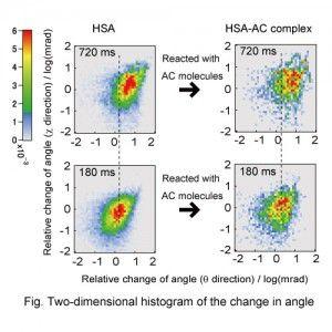 Split two-dimensional histogram of the angular motion of (a) Human Serum Albumin (HSA) and (b) HSA bound with 2-anthracenecarboxylic acid (AC). © Yuji C Sasaki. #UTokyoResearch