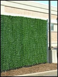 chain link fence forevergreen hedge privacy slats i like this idea the best of course - Garden Ideas To Hide Fence