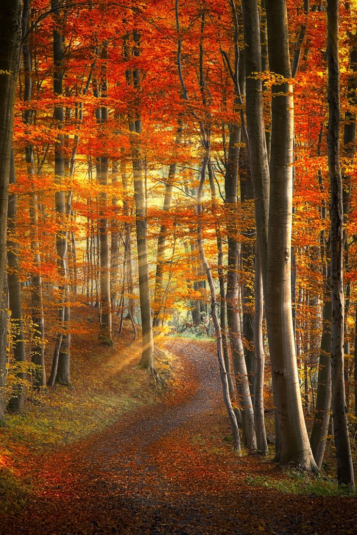 Autumn Sunbeams, Herbst, Germany
