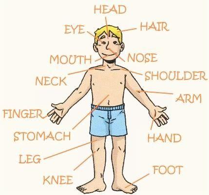 Partes do corpo body