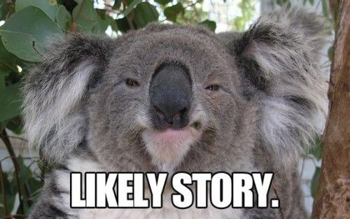 koala meme - Google Search | Memes | Pinterest | Koalas ...