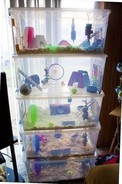 Best 25 hamster house ideas on pinterest diy hamster for Hamster bin cage tutorial