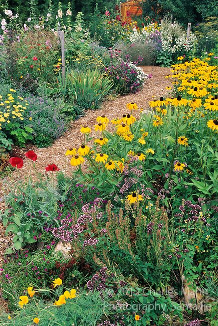 In the southwest andn Rocky Mountain areas, water wise landscape designs come in all colors and shapes and incorporate a wide range of both nativespecies as well as appropriate adapted plants, ranging from succulents and cacti to endemic penstemons and traditional perennials.  Laura and Time Spear have created a colorful perennial garden in their Colorado Springs compund.