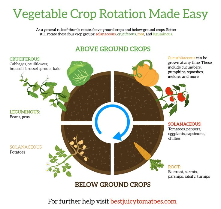 Crop Rotation: What to Plant After Tomatoes | Gardening | Growing Vegetables