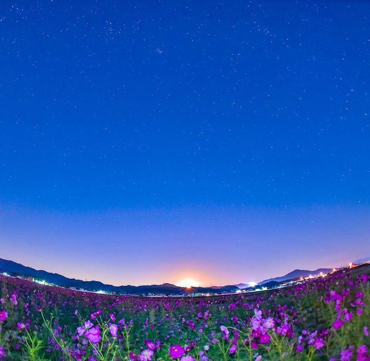 おはようございます♪(*^^)o∀*∀o(^^*)♪ 月曜の朝から☔️はテンション下がりますね〜(´ー`) 明日からは良さそうな⁉️ 今週もよろしくお願いします🤗  沈む月夜のコスモス畑💕  #bestjapanpics  #はなまっぷ  #月夜 #moonlitnight  #japan_art_photography  #japan_night_view  #japan_photo_now  #ptk_flowers  #ptk_japan  #phos_japan  #petal_perfection  #bestnatureshots  #tokyocameraclub  #icu_japan  #igersjp #ig_japan  #team_jp_  #team_jp_西(滋賀) #カメラ好きな人と繋がりたい  #写真好きな人と繋がりたい  #写真撮ってる人と繋がりたい  #ファインダー越しの私の世界  #誰かに見せたい空  #nikond750  #nikon倶楽部  #lovers_nippon  #loves_nippon  #loves_japan…