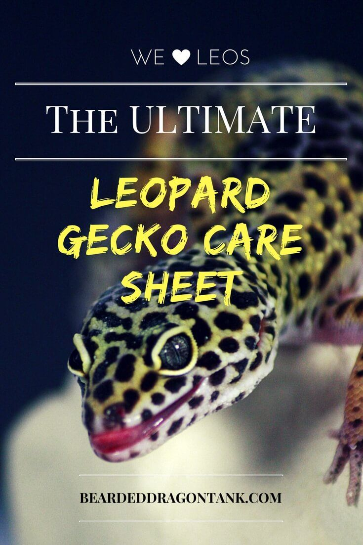 Amazing! Probably the most thorough resource when it comes to keeping Leopard Geckos