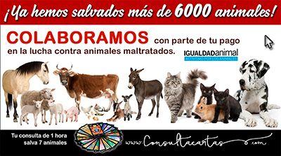 donaciones para animales