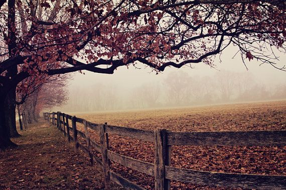 Made the FP  Misty Autumn Morning landscape by PattiCakesDesign, $30.00