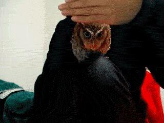 Curious Owl (GIF Animation)