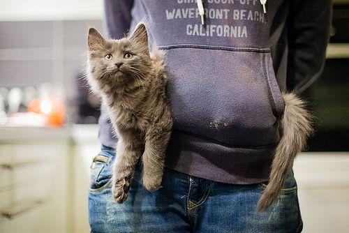 Crazy cat lady cat carrier