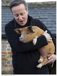 Trends and Politics  : David Cameron allegedly had sex with a dead pig