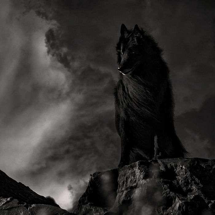 Belgian Shepherd Groenendael sitting on rocks with dramatic sky