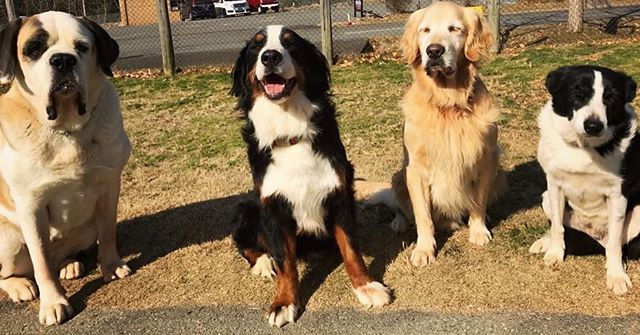 hcpsafari 1/11(ワンワンワン)ということで 本日は #犬の日 です∪・ω・∪♪ 小型犬もですが、大型犬もカワイイのです♡ #姫路セントラルパーク #サファリ #犬 #himejicentralpark #safari #dog Himeji Central Park 2018/01/11 18:20:07