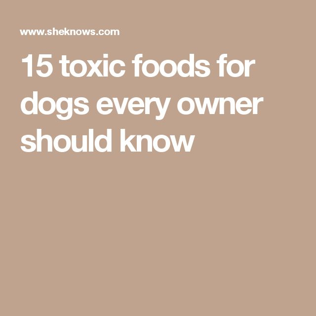15 toxic foods for dogs every owner should know