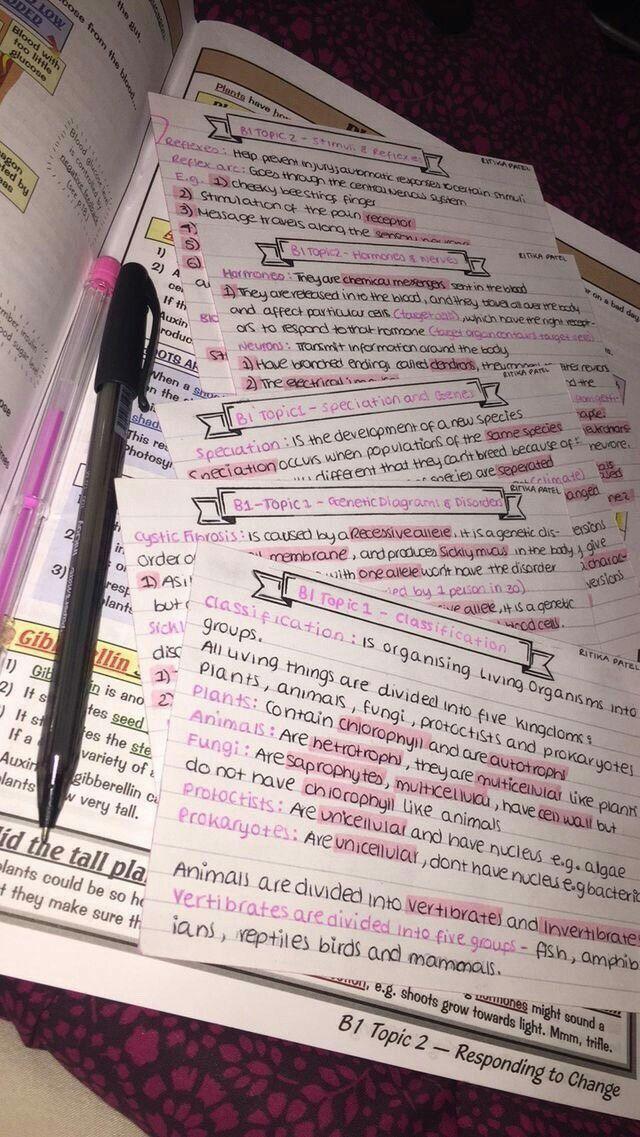 – Studyblr stuff