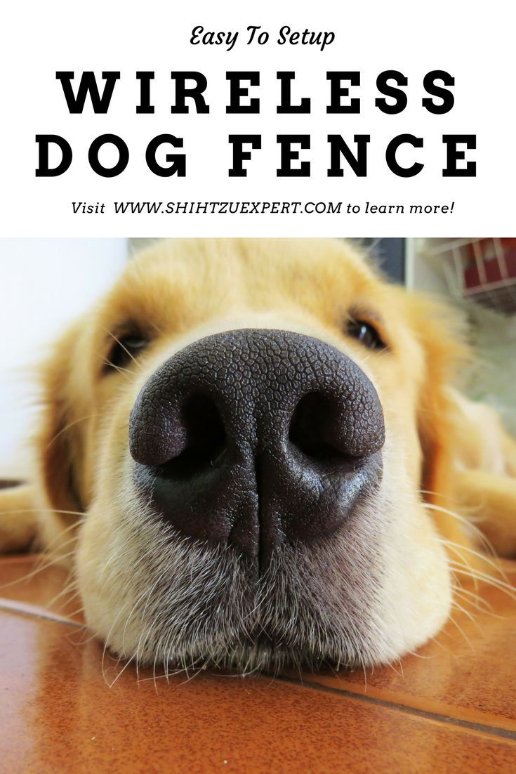 Best Wireless Dog Fences 2019 The Solution To Your Dog S Happiness And Safety With Images Wireless Dog Fence Dog Fence Dogs