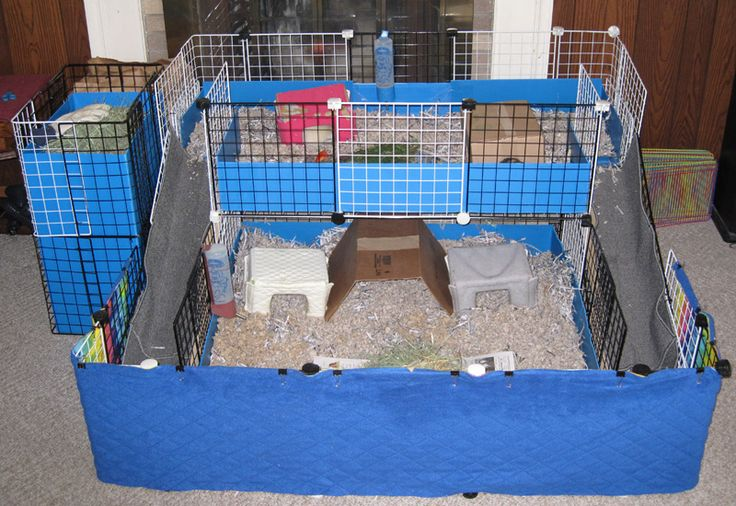 The nature of guinea pigs makes it easy to build an attractive and spacious cage quite easily, and usually at less cost than commercial cages (see Homemade Cage Ideas). Description from ces-pcfi.motionsforum.com. I searched for this on bing.com/images