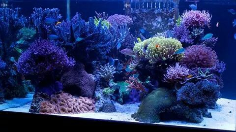 53 best reef portfolio akvarijum studio reefroom images for Reef fish for sale
